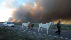 El Paso County Sheriff's Deputy Dan Cukowski helps evacuate Linda Davies and her horses during the Black Forest Fire on June 11. Jerilee Bennett/MCT/ZUMAPRESS (http://www.motherjones.com/environment/2013/06/climate-change-making-wildfires-worse)